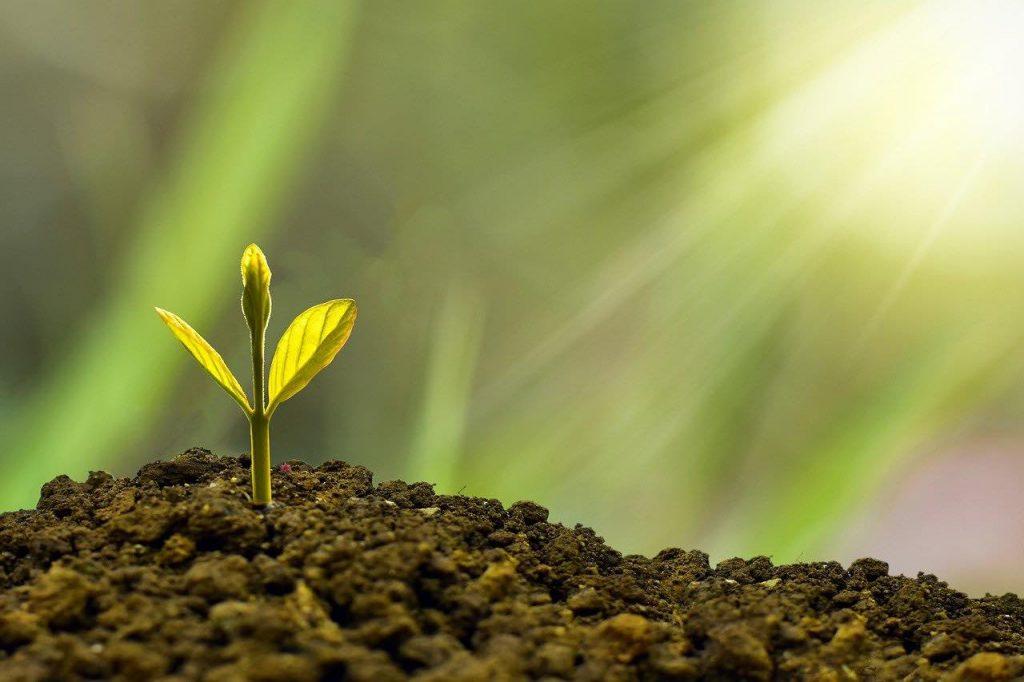 economía verde la solución