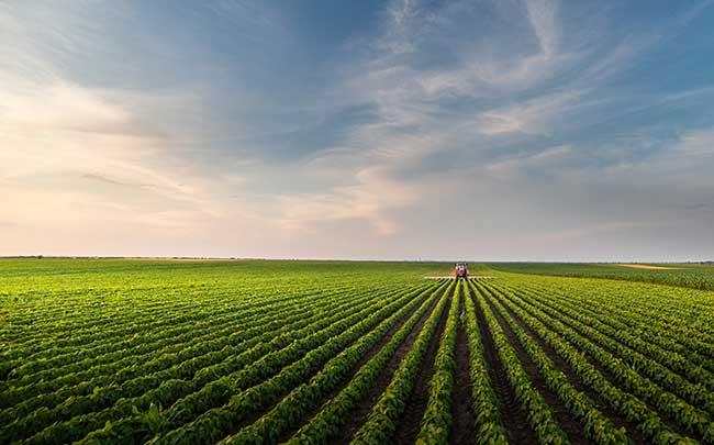 soluciones para los problemas ambientales y agricultura responsable
