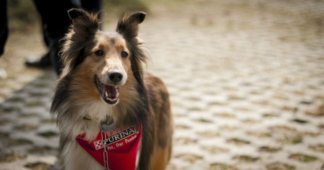 parque purina, nestle, purina, purina nestle, parque para perros, parque para perros en mexico, parque para perros en el estado de mexico, como cuidar el bienestar de las mascotas, rol de las mascotas en la sociedad, marca purina, purina pro plan, cuautitlan izcalli, parque de los lirios, parque espejo de los lirios, derechos de los animales, derechos de los perros, perros, ejercicio para perros, como ejercitar a mi perro