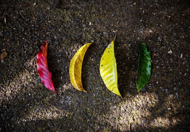 La Carta de la Tierra a las empresas. Desarrollo sostenible y RSE