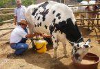 Las grandes marcas ponen en peligro a productores de leche... ¿Y el comercio justo?