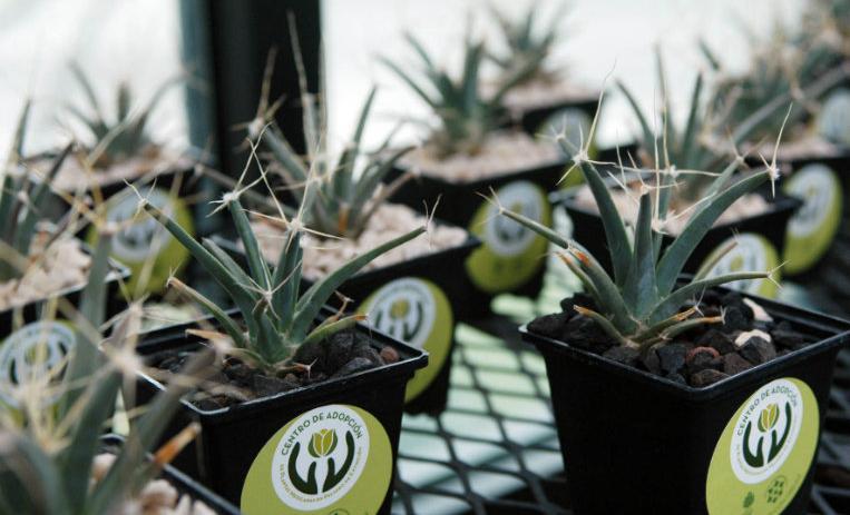 ¿Cómo adoptar una planta en peligro de extinción?