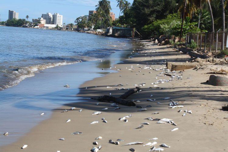 Resultado de imagen para mares y rios contaminados con basura