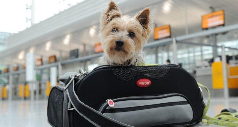 Muere perro en United Airlines y suspenden este servicio