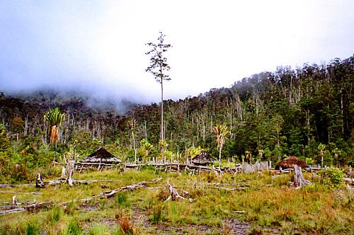 Pérdida de biodiversidad avanza mil veces más rápido de lo que debería