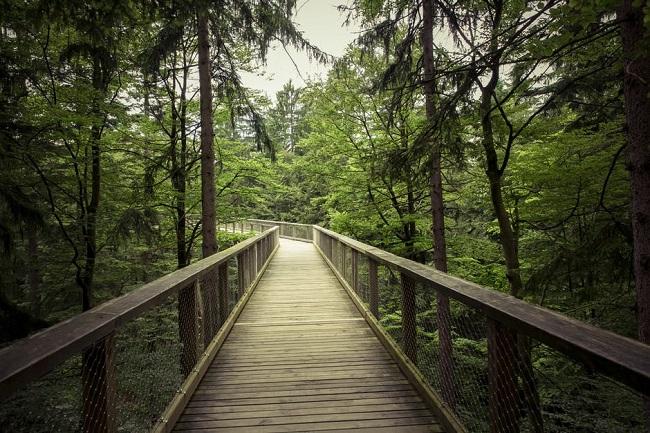Los retos ambientales son una de las tendencias en inversion responsable