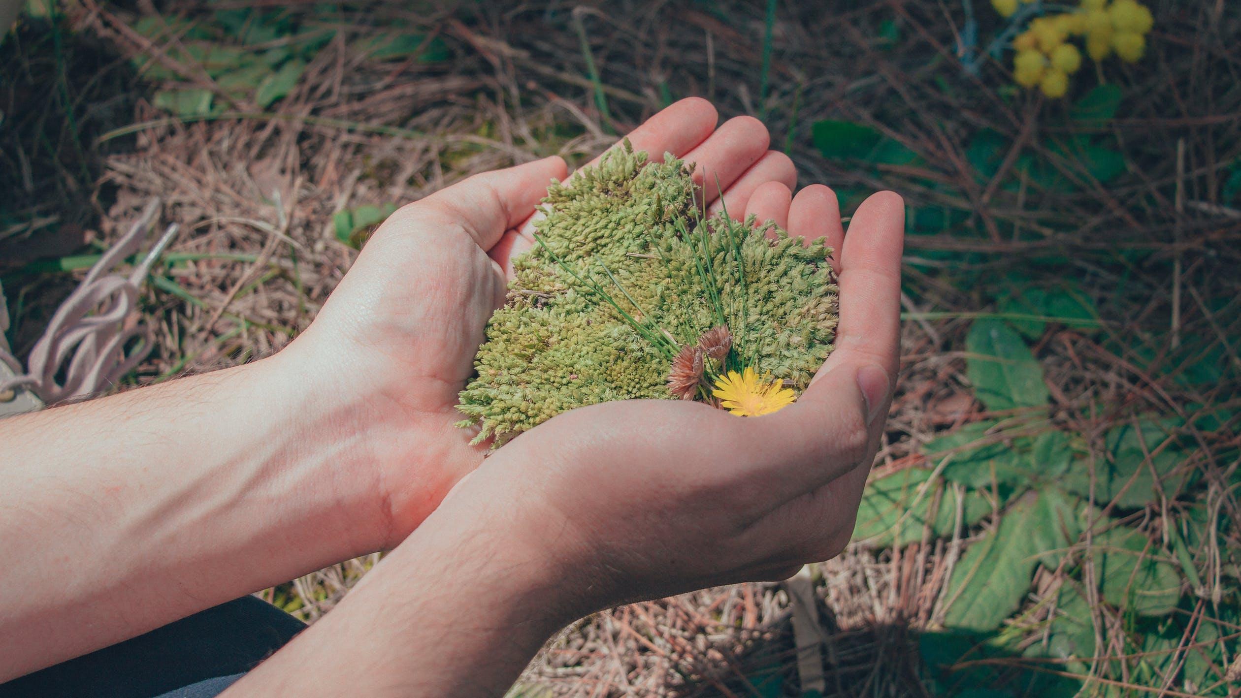 Cómo lograr que tus consumidores se interesen en la sustentabilidad