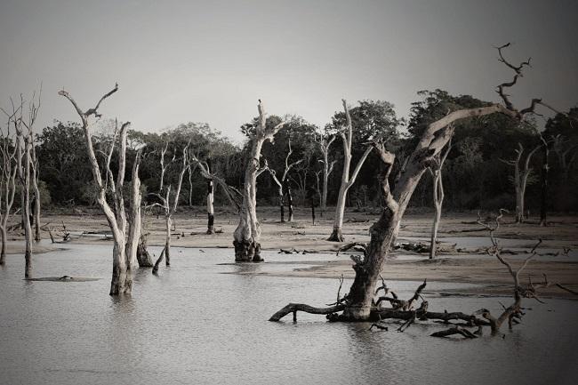 El futuro de la RSE ante desastres naturales
