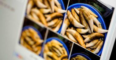 Facebook fomenta la venta de partes de animales en extinción