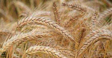 Monsanto, ¿la nueva adquisición de Bayer