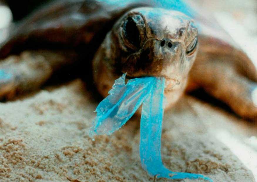 10 datos importantes de la contaminación por plástico