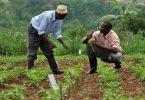 Ayudar a los agricultores en África, así lo hace esta asociación
