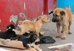 México, primer lugar con animales en situación de calle