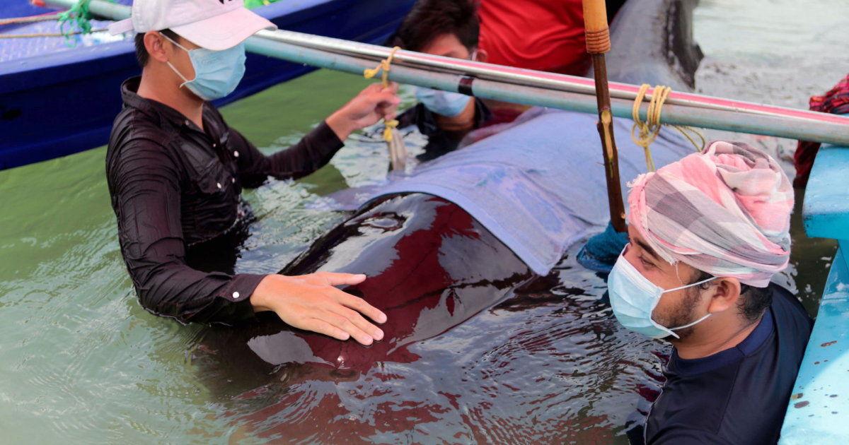Muere otra ballena, se tragó 80 bolsas