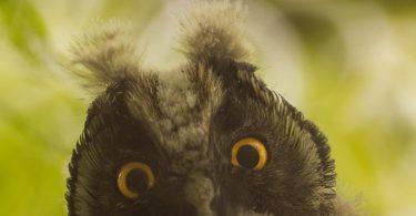 WWF, ambiental, sostenibilidad, especies, conservación
