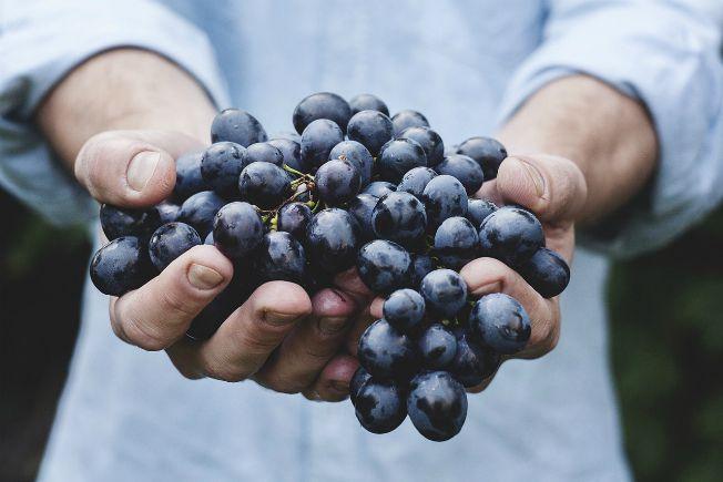 gastronomia sustentable, toks, que es la gastronomia sustentable, restaurantes toks, rse de toks, responsabilidad social toks, proyectos productivos toks, dia de la gastronomia sostenible, seguridad alimentaria
