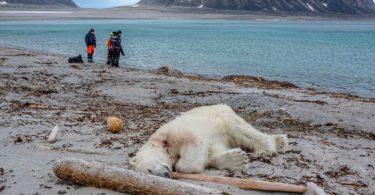 ¿Matar a un oso en autodefensa va contra la RSE?