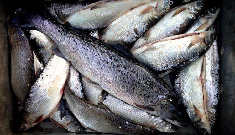 35% del pescado nunca es comido; se va a la basura – ExpokNews