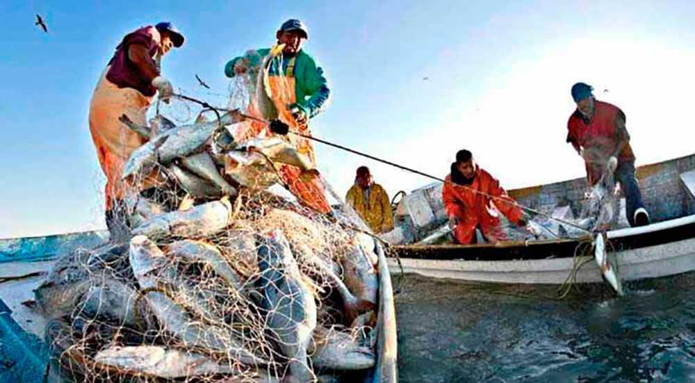 Disminución de la productividad en la pesca; culpa del cambio climático