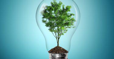 ¿Cómo vivir ecológicamente? ¡Haz estos cambios!