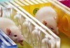 Este laboratorio de pruebas en animales abre sus puertas