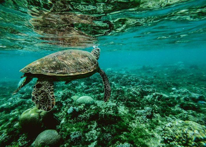 Las tortugas pueden morir si comen una sola pieza de plástico