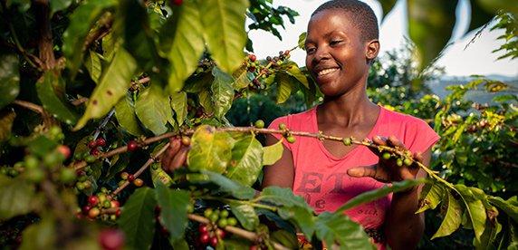 Beneficios de la cadena de valor de Nestle en Zimbabue