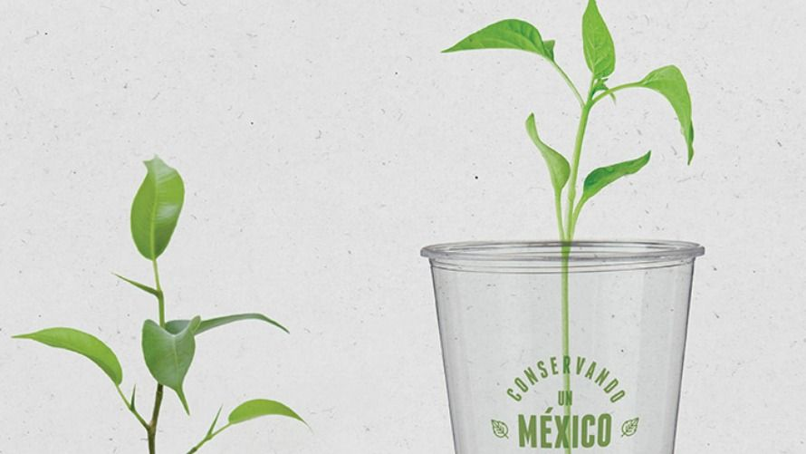 Popotes biodegradables de maíz, empresa mexicana los crea
