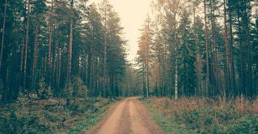 Unilever y Walmart anuncian iniciativas de sostenibilidad forestal en la Cumbre Mundial de Acción Climática