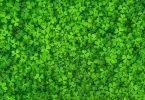 Apple, Dell y Levi's Top 3 en las 30 marcas más verdes en cadena de valor