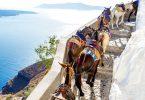 Prohíben a personas con obesidad montar burros en Grecia