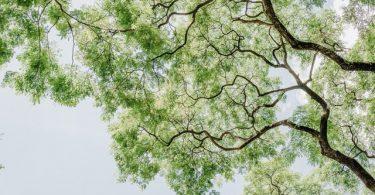 cómo ser un viajero ecológico