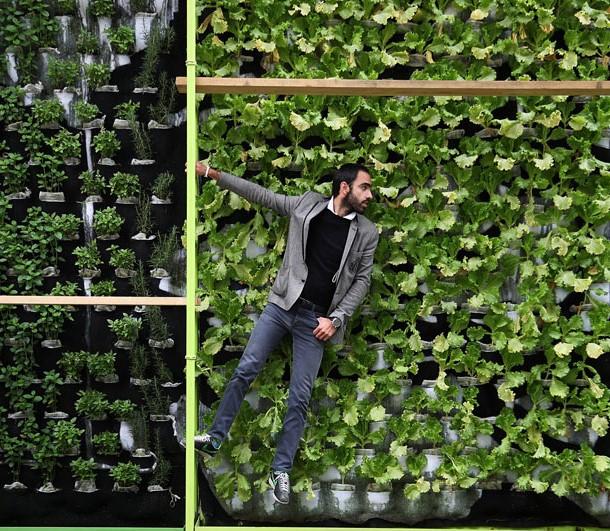 Hacer verde a la CDMX