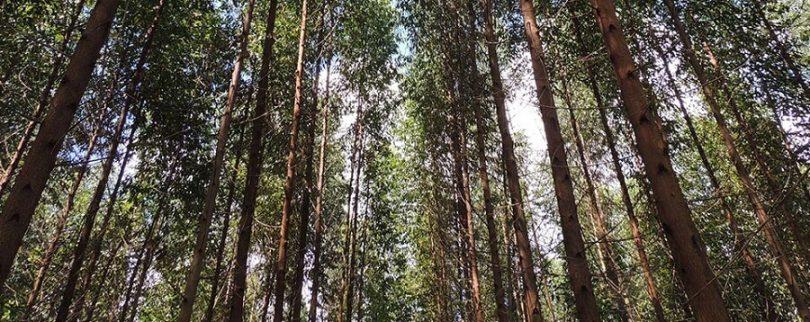 Los esfuerzos de Nestlé en cadena de valor para evitar deforestación