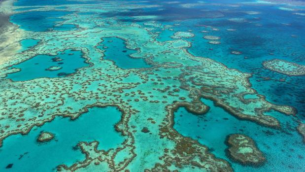 Daños por cambio climático en la Gran Barrera de Coral australiana