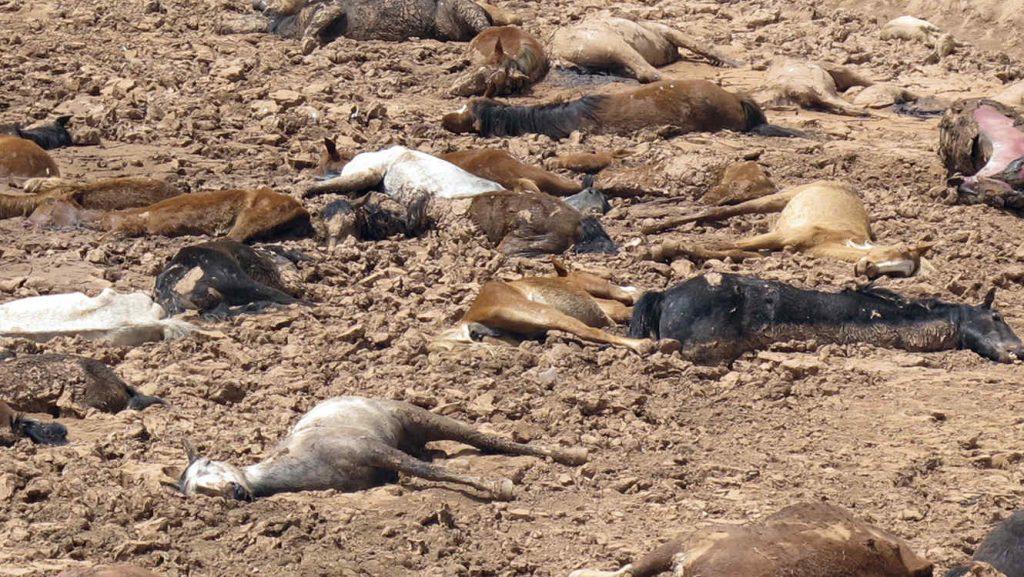 Extinción masiva de animales