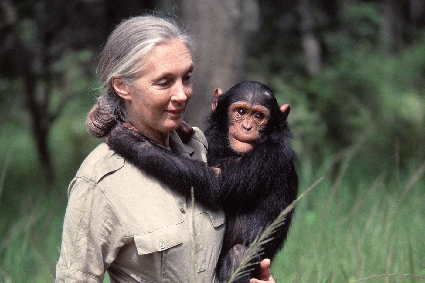 Extinción masiva de animales; Jane Goodall advierte tráfico ilegal de especies | ExpokNews