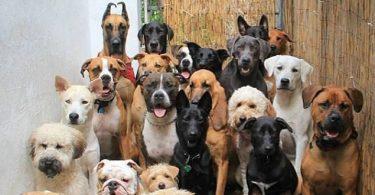 Reino Unido ya no vende perritos en tiendas