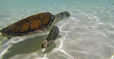 Turismo sustentable en Riviera Maya