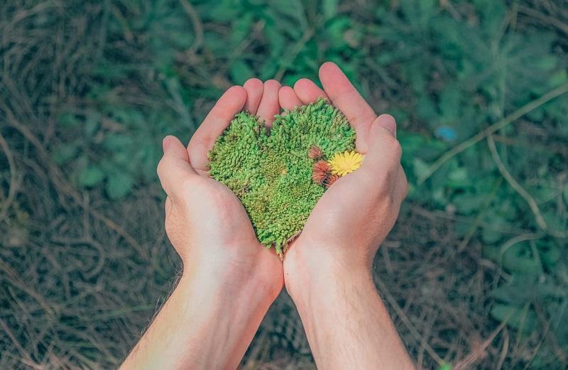 10 increíbles momentos para el medio ambiente en 2018