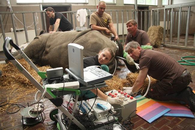 10 increíbles momentos para el medio ambiente en 2018 rhinoceros