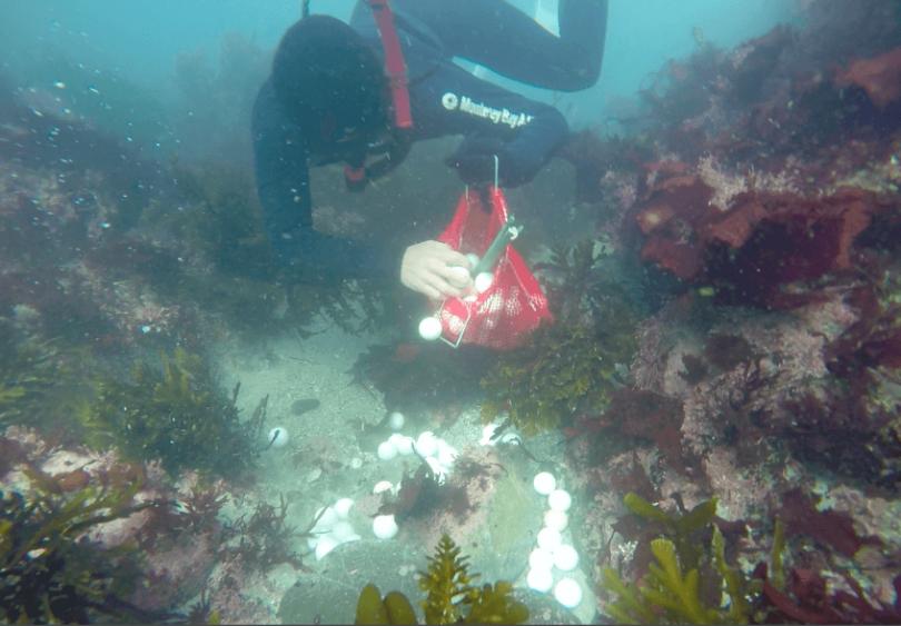 Chica extrae 5,000 bolas de golf de aguas costeras
