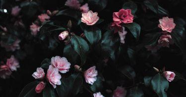 ¿Cómo asegurar flores éticas en San Valentín