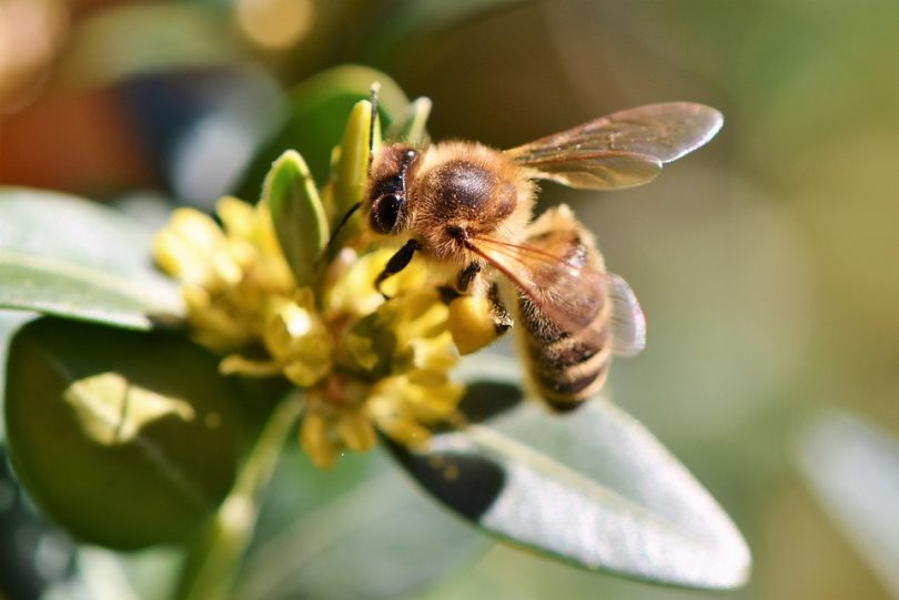 Morgan Freeman ayuda a salvar a las abejas; puso un santuario