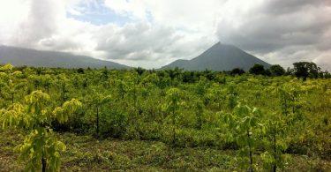 Planta un árbol con Ecosia en un solo clic
