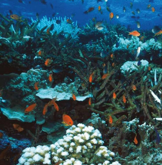 El futuro de la sustentabilidad: 7 áreas de cambio - biodiversidad
