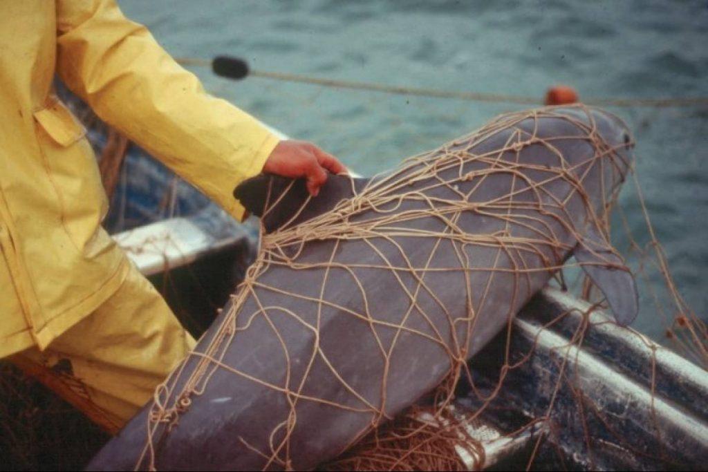 Nuevo plan por la vaquita marina no contempla a pescadores;