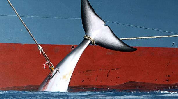 Pesca ilegal y sobreexplotación de especies