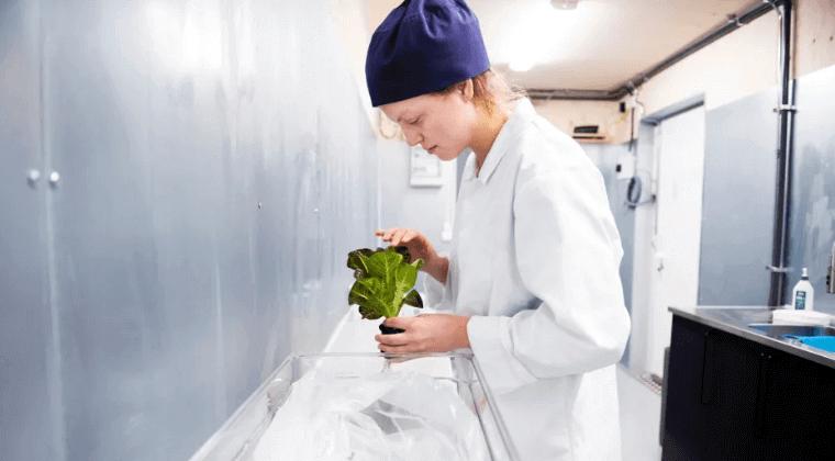 Ikea ahora cultiva lechuga en contenedores de envío en sus tiendas