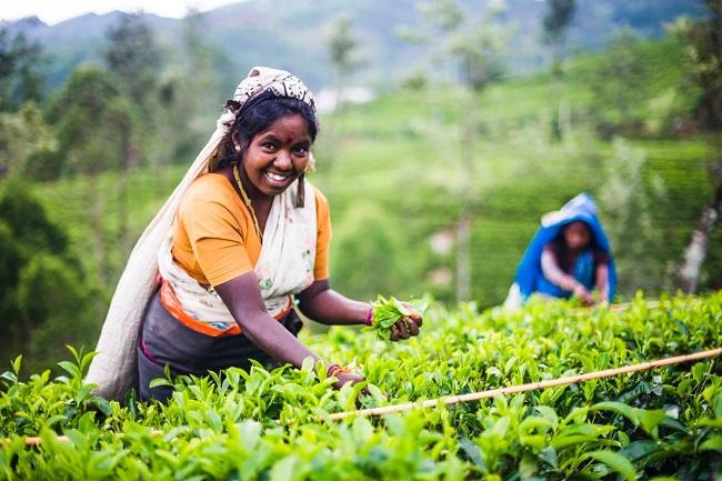 las PyMEs pueden ayudar a acabar con la pobreza - esta es la manera de ayudar de Republic of Tea